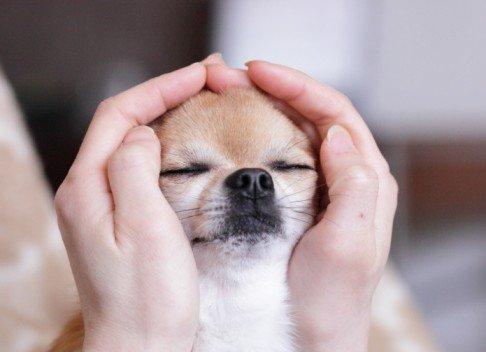 Dog Reiki