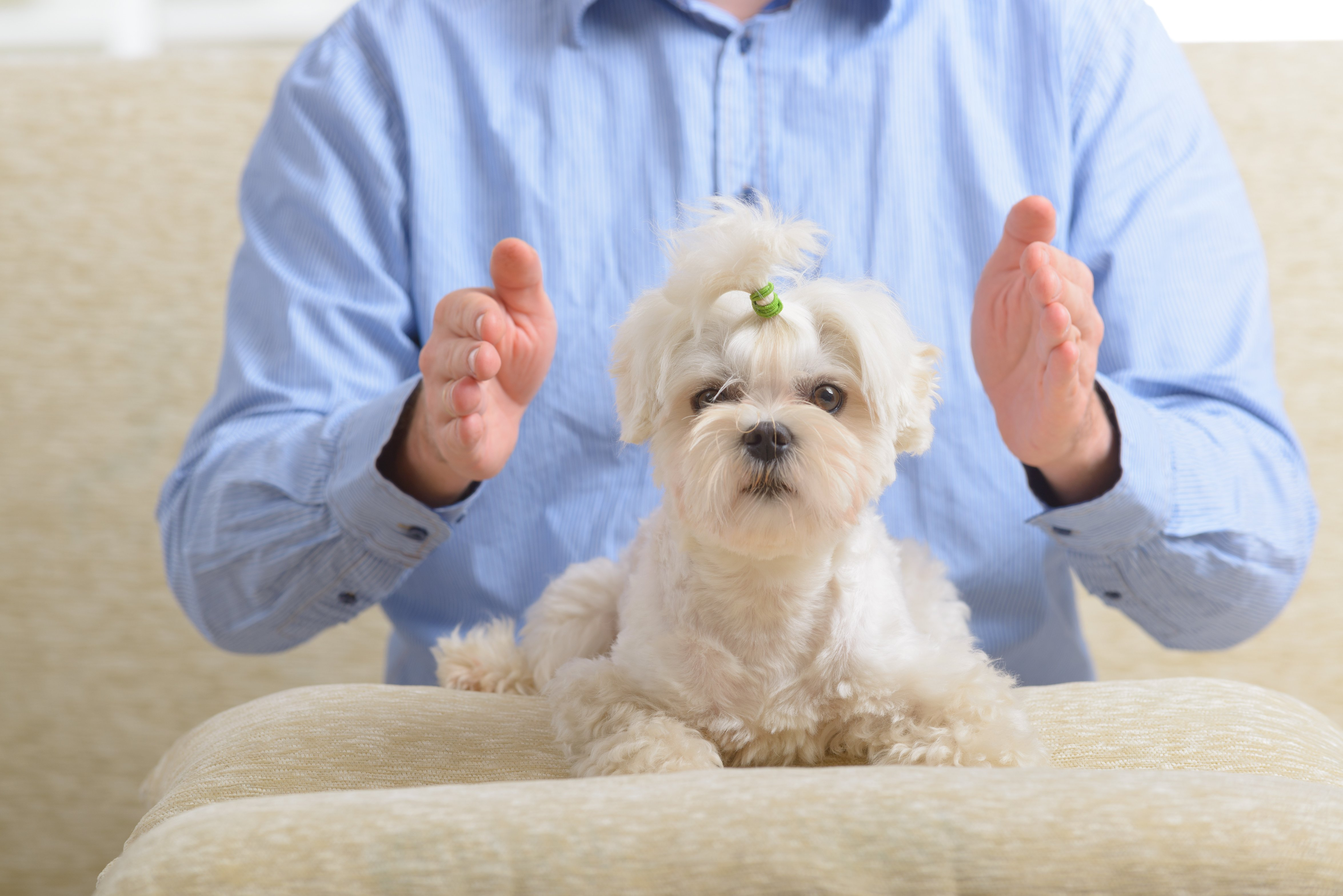 Reiki on Dog